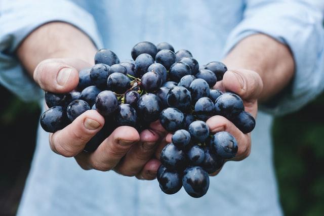 wino sentencje i aforyzmy